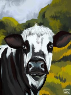 diary cow in field