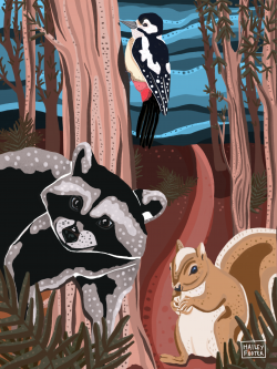Raccoon, Squirrel and Woodpecker